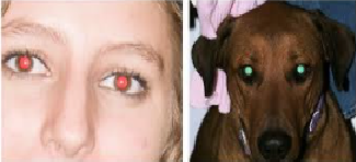 Science in School: Glowing Eyes? - You (and your Dog) are not Alone